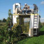 Производство яблочного и грушевого сидра: сбор яблок машинами
